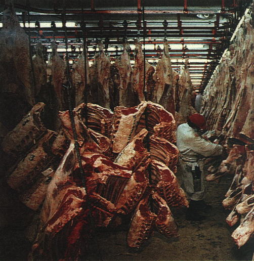 slaughterhouse_victims